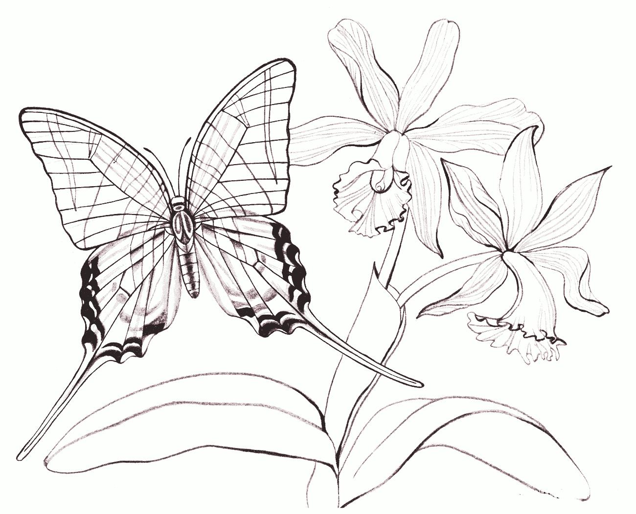 Распечатать картинки цветы и бабочки, рисунки дню