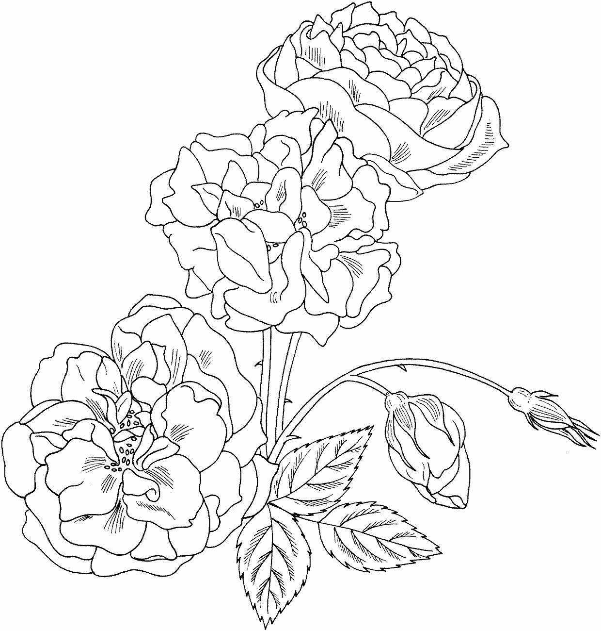Днем, картинки цветы распечатать на принтере