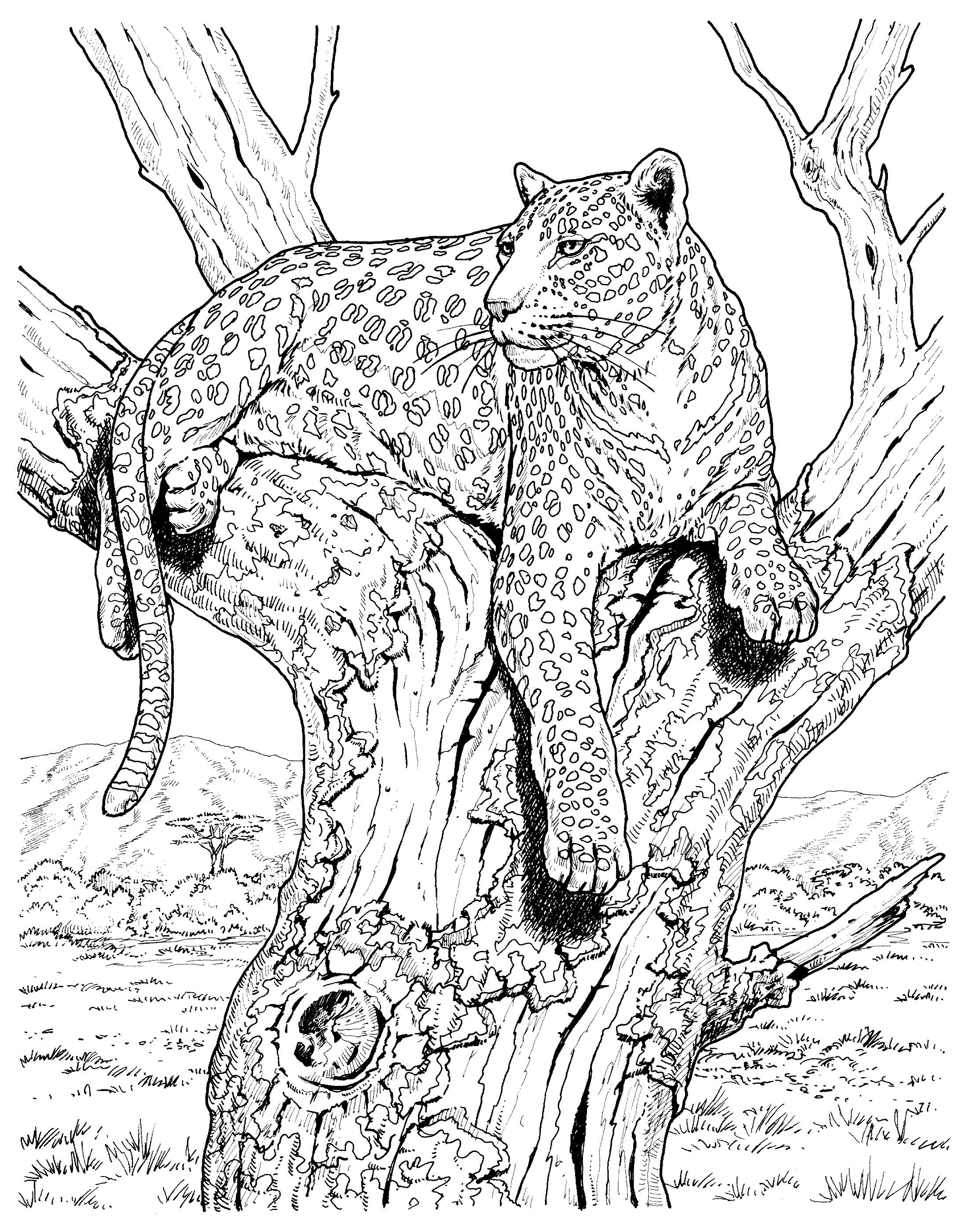 картинки для выжигания по дереву животные сеть упором
