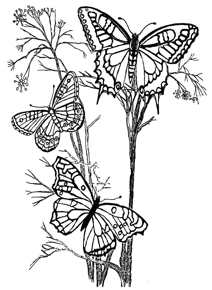 Картинки бабочка на цветке в карандаше