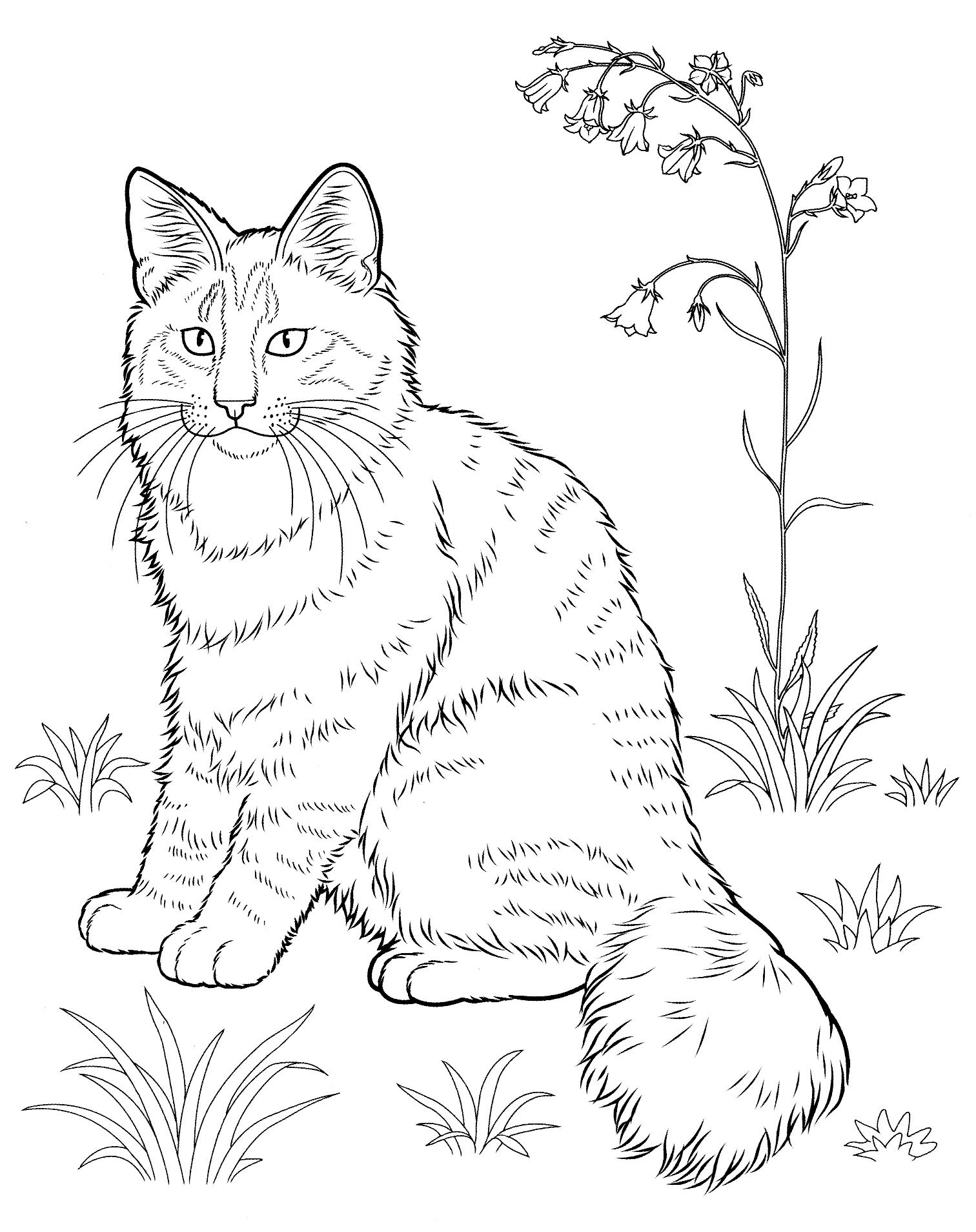 картинки с котами печатать въездов дворы