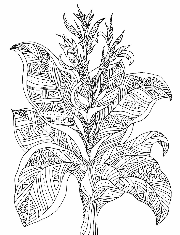 Дзен-растение. Тропическое растение с медитативным узором